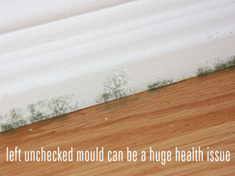 Mould causing health issues over time