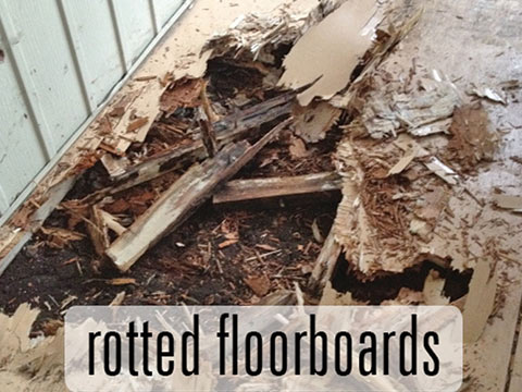 Rotting floorboards