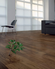 Hardwood floor and a green plant